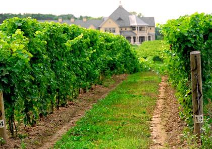 hike in the vineyard